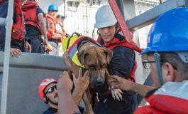 Humbasin në Paqësor, marinaret dhe qentë gjenden pas 5 muajsh