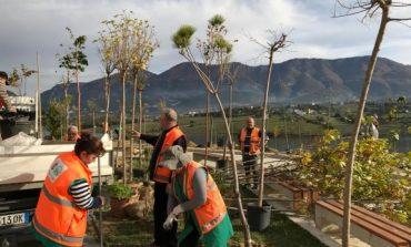 Bashkia e Tiranës zëvendëson pemët e dëmtuara tek Liqeni i Farkës