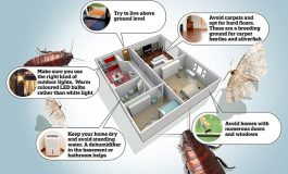 5 mënyra si ti mbani larg shtëpisë të gjitha llojet e insekteve