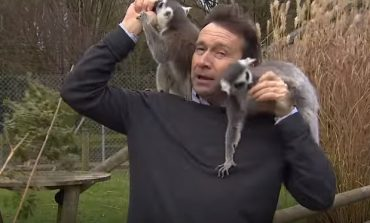 VIDEOJA EPIKE/ Gazetari mundohet të bëjë reportazhin, por kafshët nuk e lënë të qetë