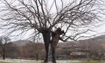 Pema që po çmend shqiptarët dhe malazezët, shihni si e nxjerr ujin (VIDEO)