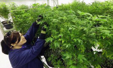 Gruaja ankohet për çmimin e lartë të drogës, përgjigja që i kthejnë policët do ju bëjë të qeshni me lot