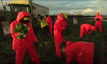 Eksperimenti SOCIAL: Ja përse në Britani kanë nevojë për emigrantët!
