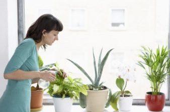 Njihuni me lulet që ju mbrojnë nga rrezatimi i dëmshëm diellor, duhet t'i keni patjetër në shtëpi
