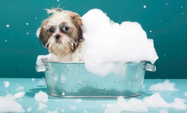 4 produktet thelbësore që duhet t'i blini patjetër nëse keni një qen në shtëpi