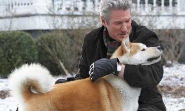 Besnikëria e qenve. Nga Hachiko tek Hawkeye, pse janë qentë kaq besnikë dhe të dashur?