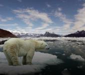 NASA jep alarmin/ Ja çfarë po ndodh në Polin e Veriut