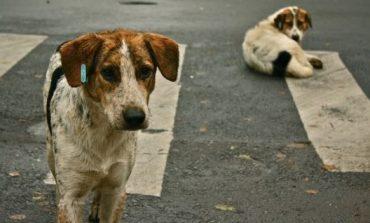 Dita Botërore e Qenve Endacak: Si manifestohet kjo ditë