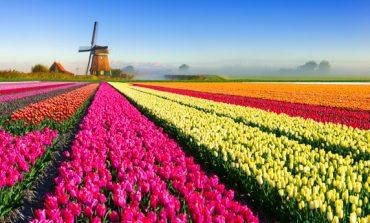 """Holanda do të presë festivalin e tulipanëve si """"vepra arti"""" (FOTO)"""