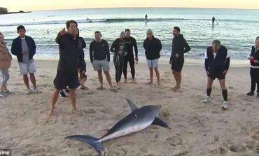 Turistët gjejnë peshkaqenin 3 metra të gjatë në breg të detit (FOTO)