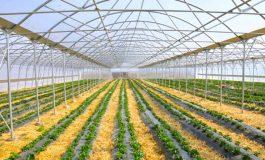 Ambasadorja e Kinës: Bashkëpunimi në fushën e bujqësisë në një stad të ri zhvillimi