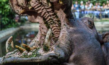 SHKUAN PËR TURIZËM/ Hipopotami kafshon 2 pushuesit, njëri prej tyre vdes (FOTO)