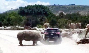 Shkuan për pushime por shikojnë vdekjen me sy, rinoceronti sulmon turistët (VIDEO)