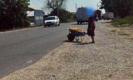 REALITETI I HIDHUR/ Gruaja në punën e burrit! (FOTO)