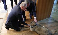 """""""ËSHTË I BUKUR""""/ Dhurata e Vuçiçit që emocionoi presidentin Putin, ja momenti (VIDEO)"""