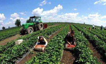 118 MILION EURO/ 4000 fermerë do të marrin subvencione, ja kush do të përfitojë
