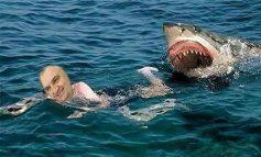 """A do t'ia dalë Presidenti Meta të arrijë në breg pa u """"ngrënë"""" nga peshkaqeni i Gjirit të Lalzit?!"""
