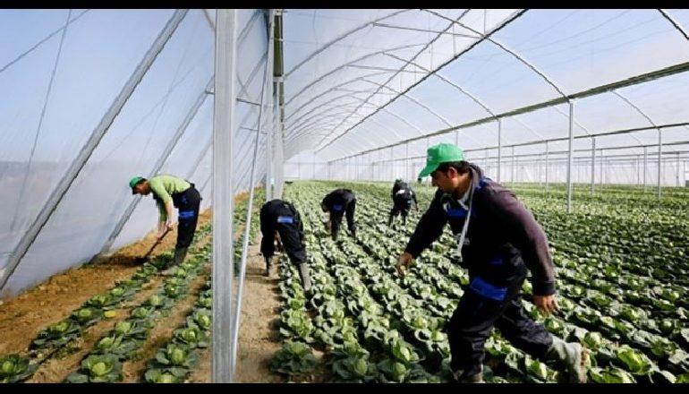 BUJQËSIA/ Rriten eksportet e prodhimeve bujqësore, zgjerohet harta në BE