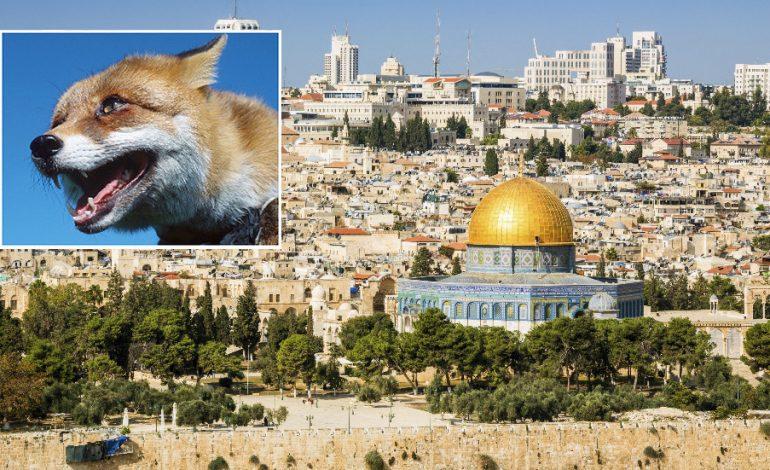 E PABESUESHME/ Zbulimi i dhelprave në malin e Tempullit të Jeruzalemit nxit profecinë për tempullin e tretë hebre