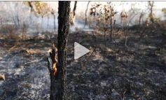 PYLLI TROPIKAL I AMAZONËS PO DIGJET/ Lexoni çfarë do të thotë kjo për mjedisin