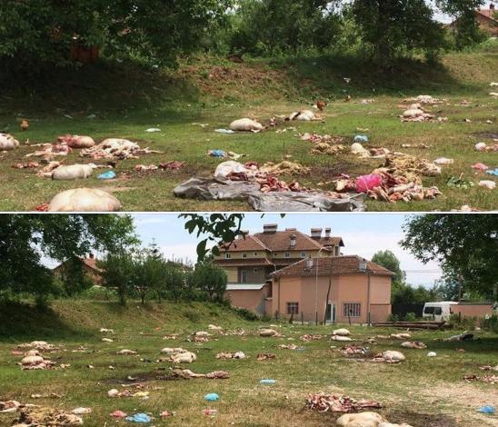 """PAMJET """"HORROR""""/ Gazetarja shqiptare poston fotot pas Bajramit: Kjo vetëm fetare që s'mund të jetë"""