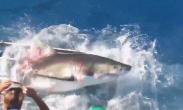 """VIDEO E TMERRSHME/ Zhytësi """"bashkëjeton"""" me peshkaqenin në kafaz"""