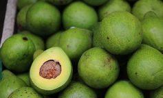 KALIUMI MBRON ZEMRËN/ Bananet, avokadot dhe patatet janë të mira për arteriet