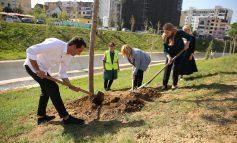 ANËT E LUMIT TË LANËS DO TË KTHEHEN NË MINIPARK/ Bashkia e Tiranës nis sezonin e mbjelljeve me 3 mijë pemë