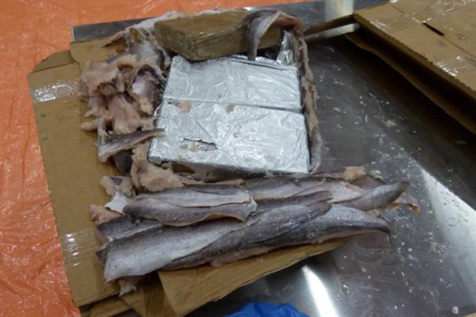 HOLANDË/ 22 mln euro kokainë midis peshkut të ngrirë, midis shtatë të dënuarve edhe shqiptari