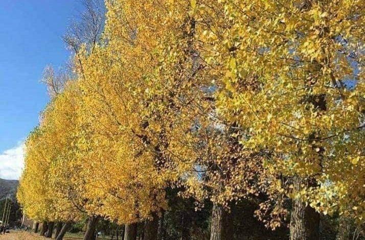 NË DRILON/ Një ditë e artë në natyrën magjike të Volorekës