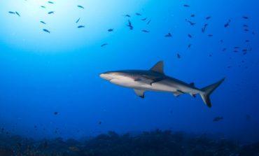 SHKENCTARËT JAPIN ALARMIN/ Po pakësohet oksigjeni në oqeane. Jeta e gjallesave është në rrezik