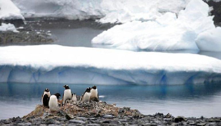 KRIZA KLIMATIKE/ Për herë të parë në historinë moderne, 20 gradë celsius në Antarktidë