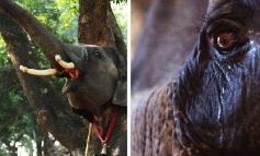 MUND TË PËRJETOJNË NDJENJA TË NGJASHME ME NJERËZIT? 12 fakte që vërtetojnë se kafshët mund të jenë edhe më humane se ne (FOTOT)