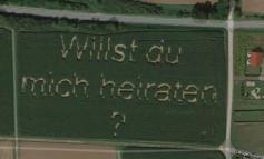 """""""DO TË MARTOHESH ME MUA?""""/ Propozimi i veçantë në një fushë të mbjellë me grurë"""