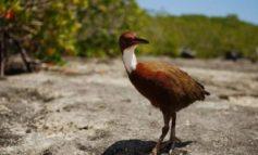 MENDOHEJ SE U ZHDUK 100 MIJË VITE MË PARË/ Rishfaqja e 'Aldabra-s' trondit shkencëtarët (FOTO)