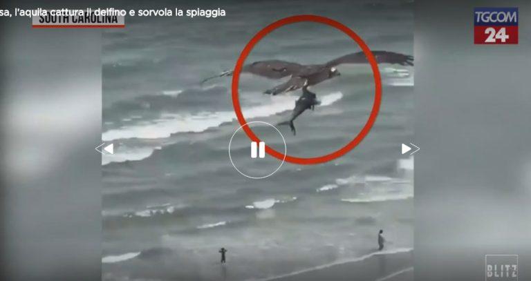 NJË SKENË E PABESUESHME/ Shqiponja kap delfinin dhe fluturon mbi plazh (VIDEO)