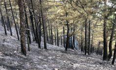SHIU SHUAN VATRAT E ZJARRIT NË TË GJITHË VENDIN/ Ministria e Mbrojtjes: Janë djegur 140 ha shkurre e pyje