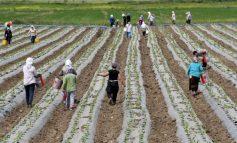 SITUATA E COVID-19/ Zgjatet leja e qëndrimit të punëtorëve sezonalë në Greqi me 90 ditë