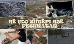 """UDHËTIM NË """"ISHULL LEZHË""""/ Në çdo shtëpi ka një peshkatar dhe një kuzhiniere"""