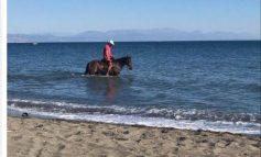 FOTOLAJM/ Në Velipojë, ku detit i hyn me... kal!