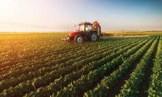 NAFTA FALAS/ Ekonomi: Skema e mirëpërgatitur, rrit fitimet e fermerëve
