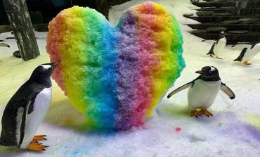 """E PAZAKONTË/ Çifti i famshëm i pinguinëve gay bëhen """"prindër"""" për herë të dytë"""