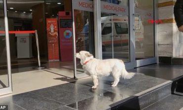PREKËSE/ Qeni ndjek ambulancën që merr pronarin e tij dhe për gjashtë ditë radhazi e pret...