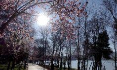 """PAMJET FANTASTIKE/ Parku i Liqenit të Tiranës """"lulëzohet"""" nga ngjyrat e pranverës"""