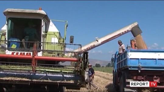 SKEMA E NAFTËS FORMALIZON SEKTORIN E BUJQËSISË/ Mbi 16 mijë fermerë të regjistruar në sistemin e tatimeve