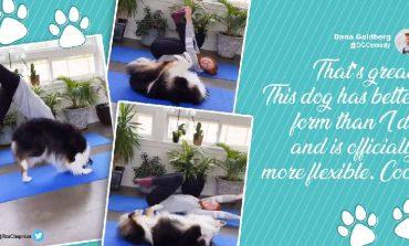 """NUK DO TA BESONI/ E imiton pa humbur asnjë ushtrim, qenushi bën """"yoga"""" bashkë me pronaren e tij (VIDEO)"""