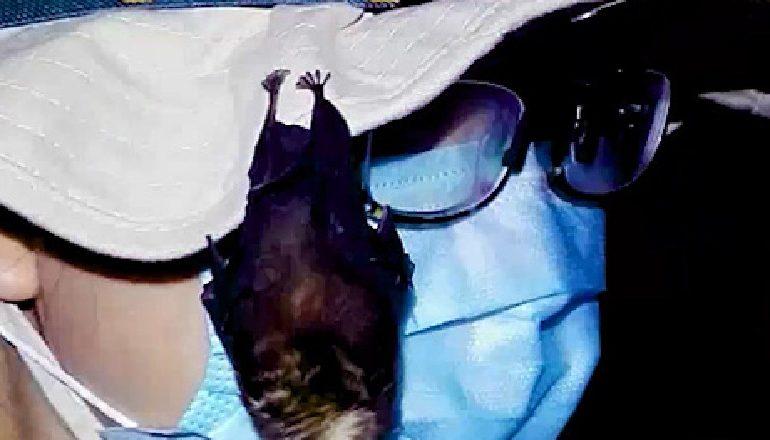 ORIGJINA E COVID-19/ Mediat ndërkombëtare sigurojnë pamje të lakuriqëve të natës në laboratorin e Wuhan