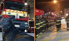 E RRALLË/ Zjarrfikësit bëjnë homazhe në funeralin e qenit të stacionit, që ndërroi jetë