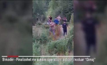 """POLICIA AKSION NË SHKODËR/ Arrestohen 6 persona, kultivuan kanabis në pyll. Momenti kur efektivët """"mësyjnë"""" me vrap nëpër parcelë"""